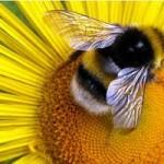 перга пчелинная и продукты пчеловодства